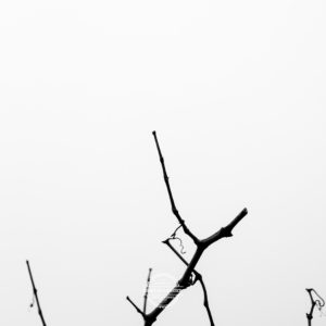 20180127-Vogelsburg-am-Main-©-Gerald-Langer_5
