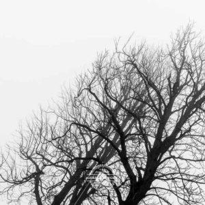 20180127-Vogelsburg-am-Main-©-Gerald-Langer_6