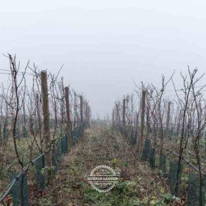 20180127-Vogelsburg-am-Main-©-Gerald-Langer_7