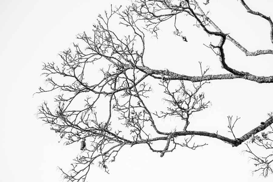 20190120_Wuerzburg-©-Gerald-Langer_24
