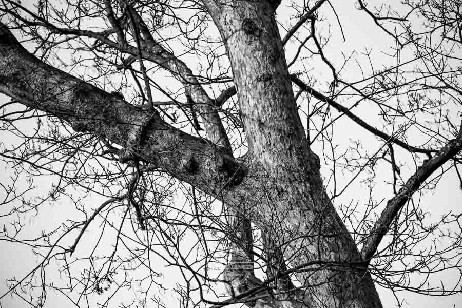 20190120_Wuerzburg-©-Gerald-Langer_9