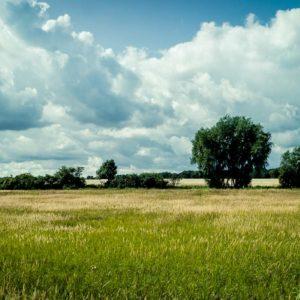 20170823-Usedom-©-Gerald-Langer_148-1