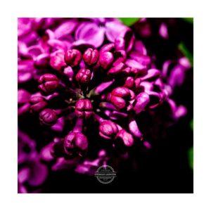 20190428_Tropfen_Garten_Kuernach-©-Gerald-Langer_14