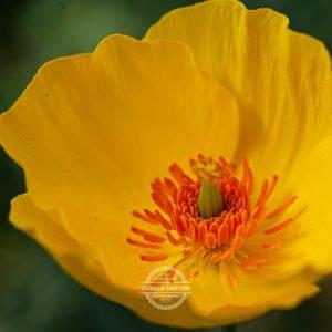 20190811_Botanischer-Garten-Wuerzburg-©-Gerald-Langer_27