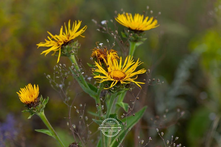 20190811_Botanischer-Garten-Wuerzburg-©-Gerald-Langer_41