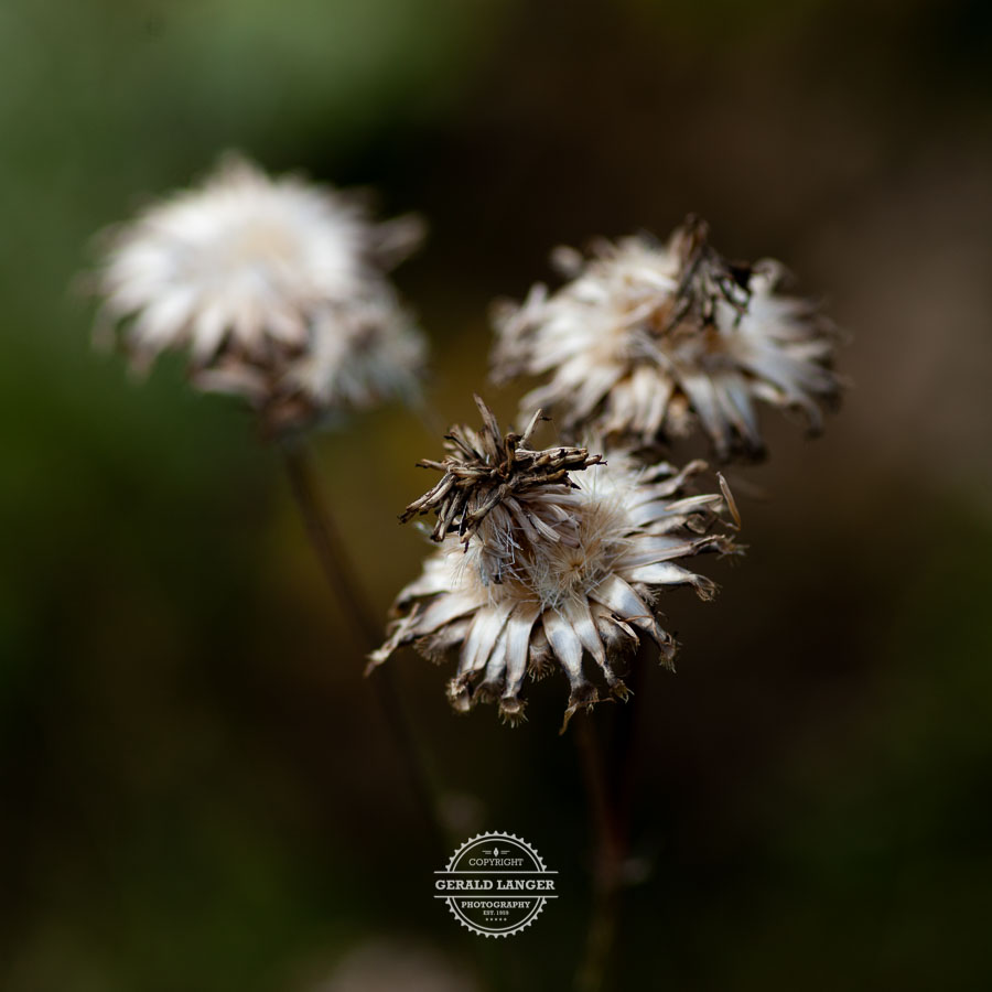 20190811_Botanischer-Garten-Wuerzburg-©-Gerald-Langer_43