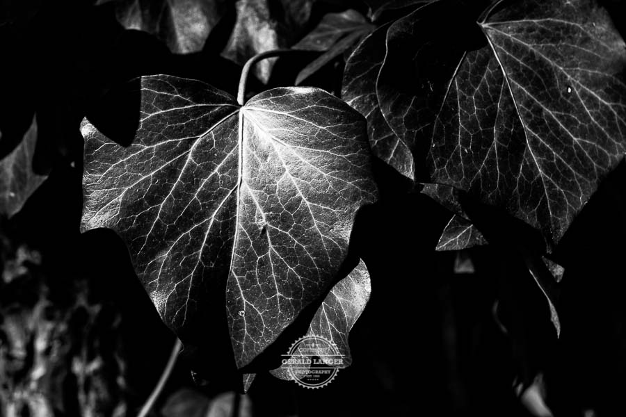 20190811_Botanischer-Garten-Wuerzburg-©-Gerald-Langer_52