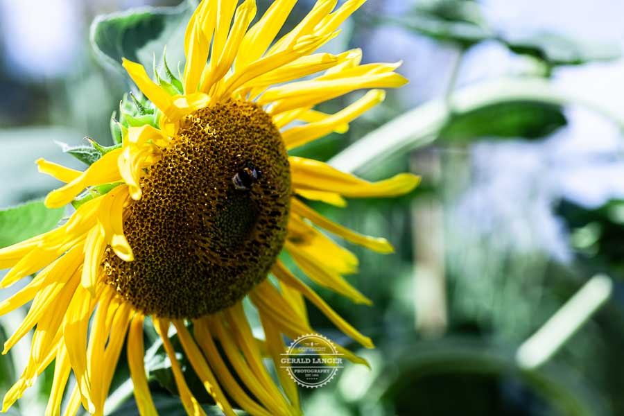 20190811_Botanischer-Garten-Wuerzburg-©-Gerald-Langer_66
