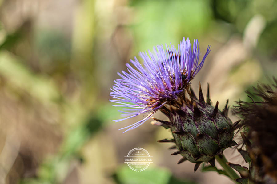 20190811_Botanischer-Garten-Wuerzburg-©-Gerald-Langer_69