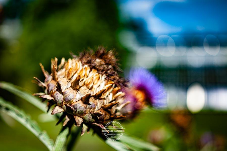 20190811_Botanischer-Garten-Wuerzburg-©-Gerald-Langer_70