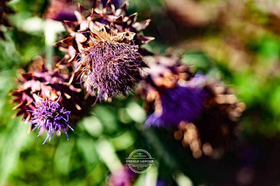 20190811_Botanischer-Garten-Wuerzburg-©-Gerald-Langer_76