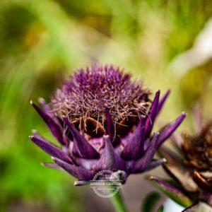 20190811_Botanischer-Garten-Wuerzburg-©-Gerald-Langer_80