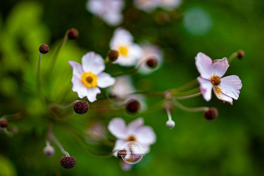 20190811_Botanischer-Garten-Wuerzburg-©-Gerald-Langer_83