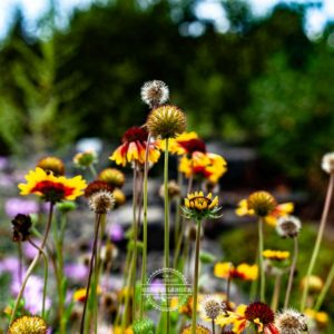 20190811_Botanischer-Garten-Wuerzburg-©-Gerald-Langer_90