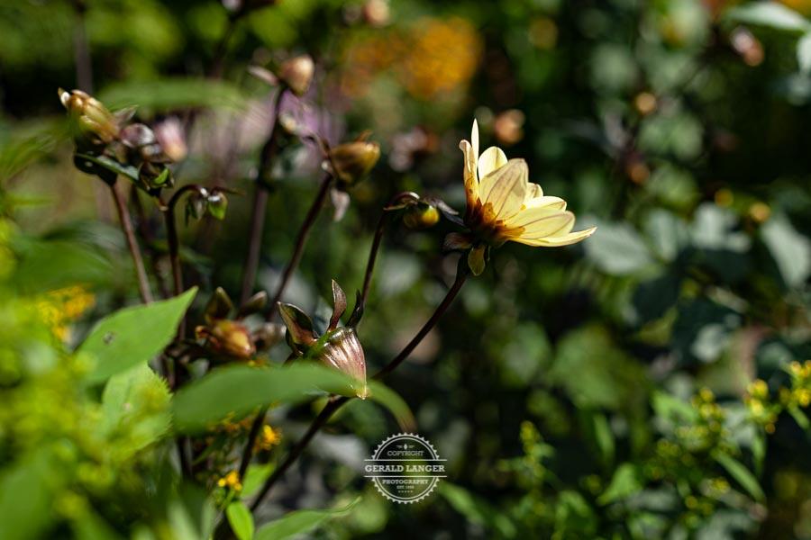 20190811_Botanischer-Garten-Wuerzburg-©-Gerald-Langer_95