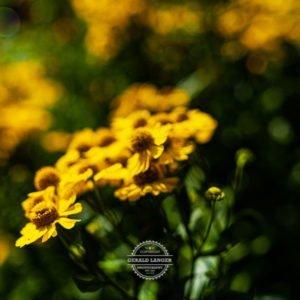20190811_Botanischer-Garten-Wuerzburg-©-Gerald-Langer_98