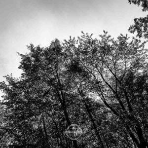 20190915_Kuernach-Rothof-iPhone-XR-©-Gerald-Langer_17