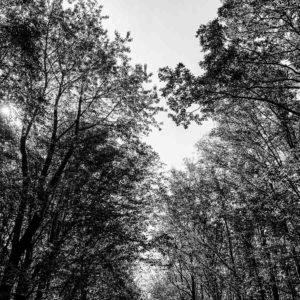 20190915_Kuernach-Rothof-iPhone-XR-©-Gerald-Langer_18