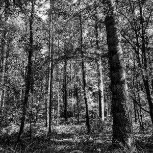 20190915_Kuernach-Rothof-iPhone-XR-©-Gerald-Langer_28