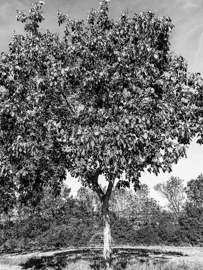 20190915_Kuernach-Rothof-iPhone-XR-©-Gerald-Langer_32