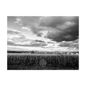 20190930_Am-Edeka-Kuernach_shot-by-iPhoneXR-©-Gerald-Langer_7