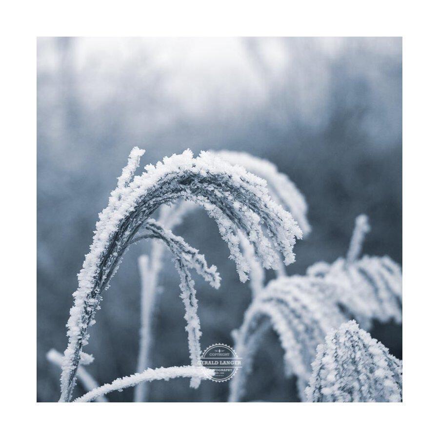 20200102_Kuernach-im-Winter-©-Gerald-Langer_1
