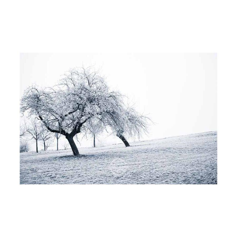 20200102_Kuernach-im-Winter-©-Gerald-Langer_79