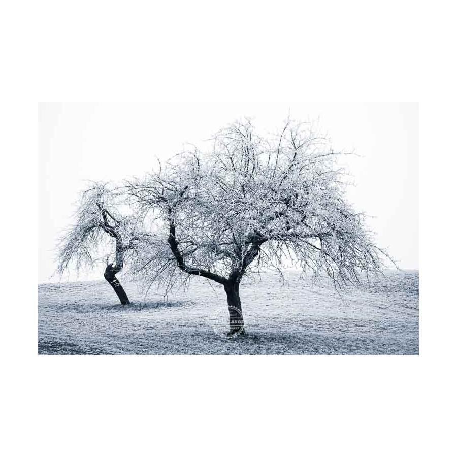 20200102_Kuernach-im-Winter-©-Gerald-Langer_81